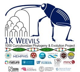 Duane McKenna Weevils Project