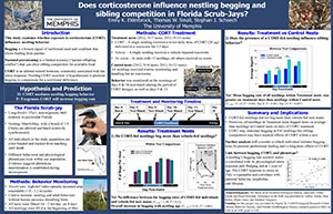 Does corticosterone influence nestling begging and sibling competition in Florida Scrib-Jays?