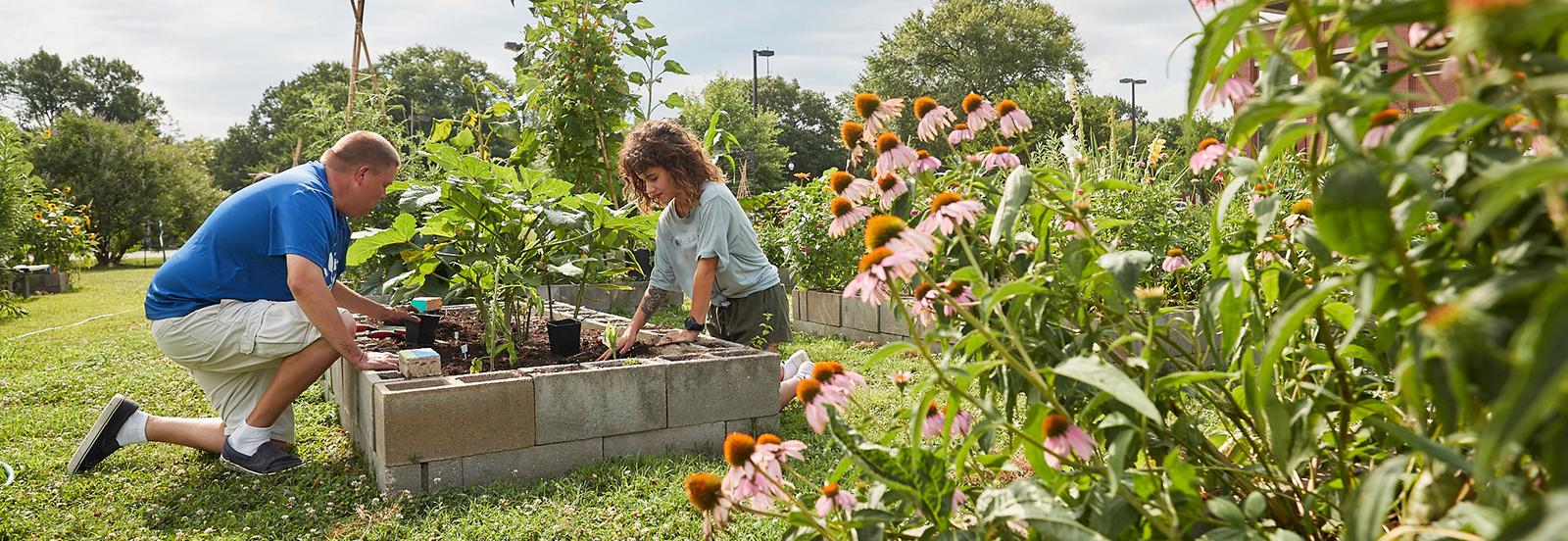 volunteers working in garden