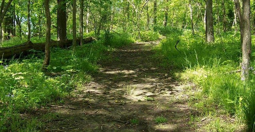 Hike the nature trail through Chucalissa's arboretum to learn how Native American used local plants.