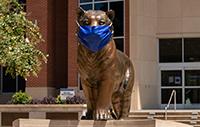 bronze tiger wearing blue mask