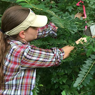Sarah Swing assesses use of arboreal habitat at Meeman Biological Station