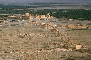 Palmyra collanade