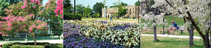 University of Memphis Photo