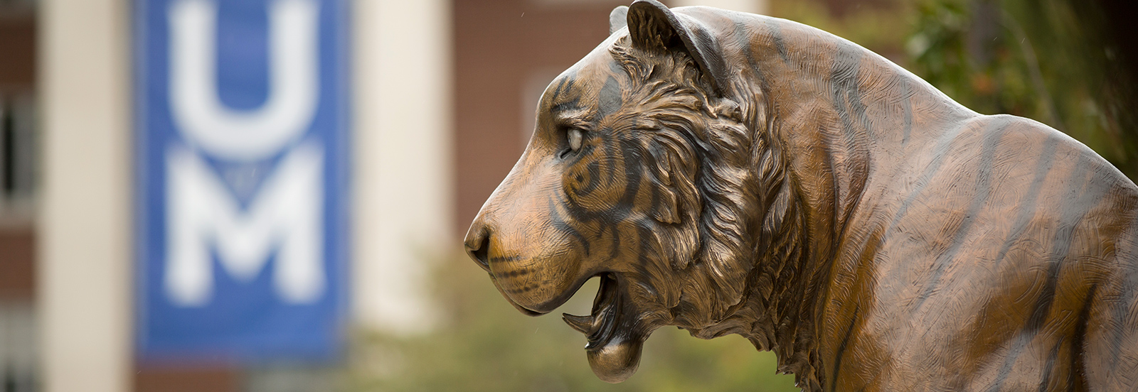 bronze tiger statue with UofM banner in background