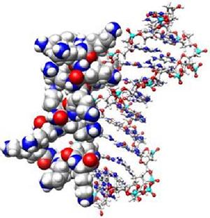 Polymer Based Gene