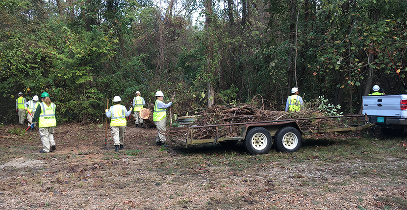 With the help of the Delta Five team, vital edge habitat has been restored by removal of downed trees, broken limbs and invasive species.