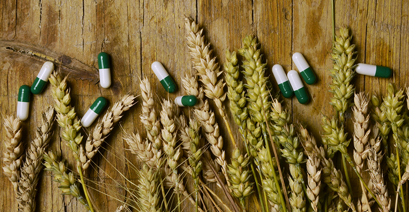 wheat grains and medicinal pills photo