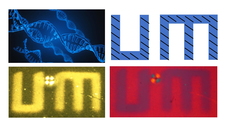 DNA self-assembled into UM Logo