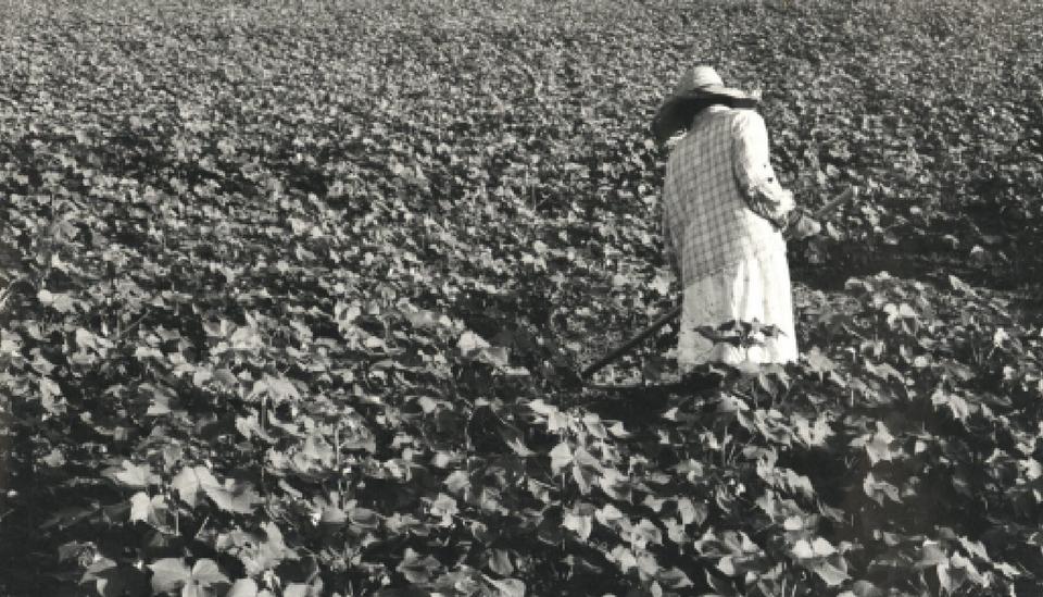 Sharecropper in fields