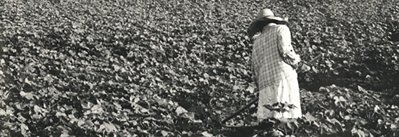 Sharecropper in fields