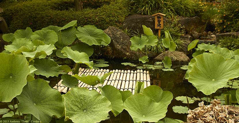 "© 2013 Anthony ""Toshi"" Cordova"